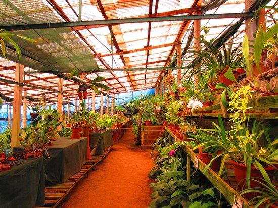 Quinta do Boa Vista : Nur ein Teil...