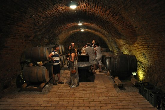 Penzion Vinarstvi Pritluky : Wine cellar beneath the hotel - owned and operated by the family who runs the hotel