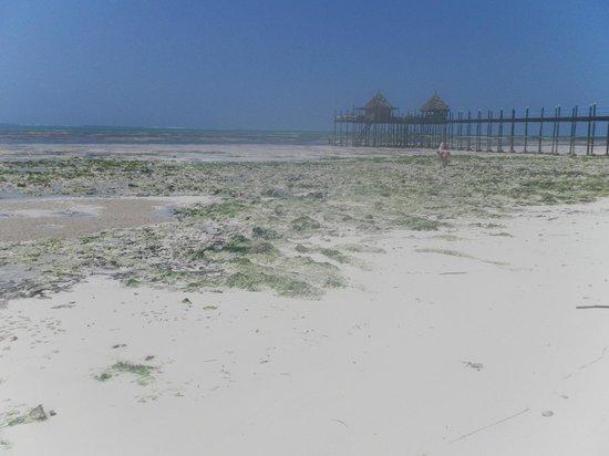 Spice Island Hotel Resort Zanzibar: Vue sur la plage