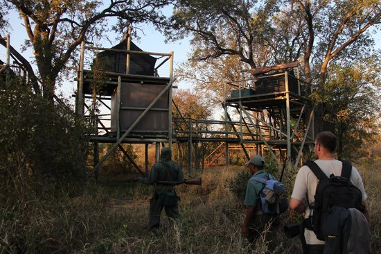 Rhino Walking Safaris at Plains Camp: Treehouse viewed by our walking group