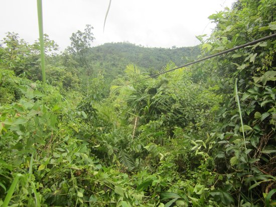 The Gibbon Experience: zipline into the bushes
