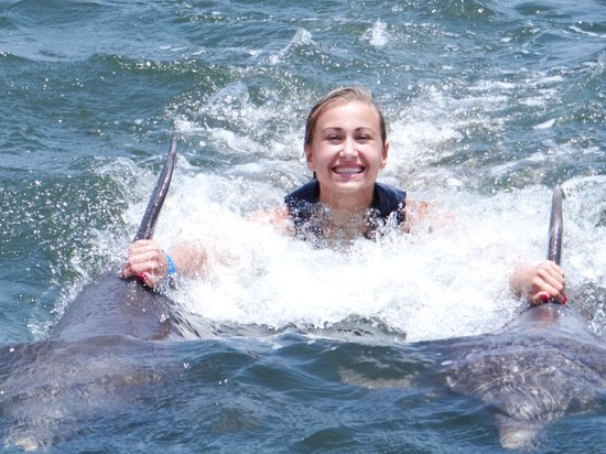 Sunset Cove: Dolphin Cove experience