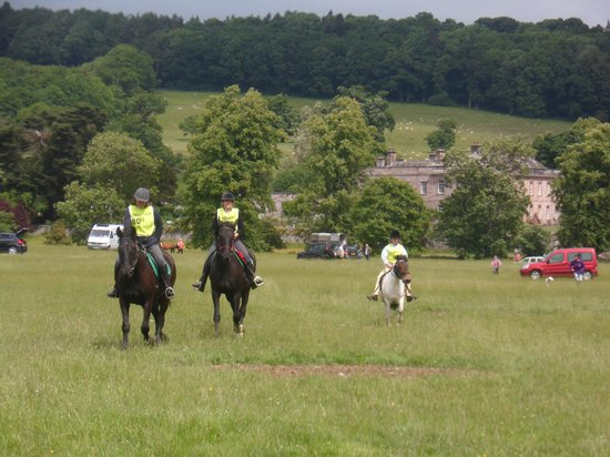 Wigton, UK: overwater horses enjoying a day out