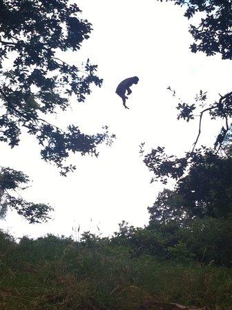 Trentham Monkey Forest: Tree hopping !!! Xxx