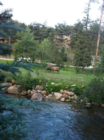 The Woodlands on Fall River: Elk in front our room
