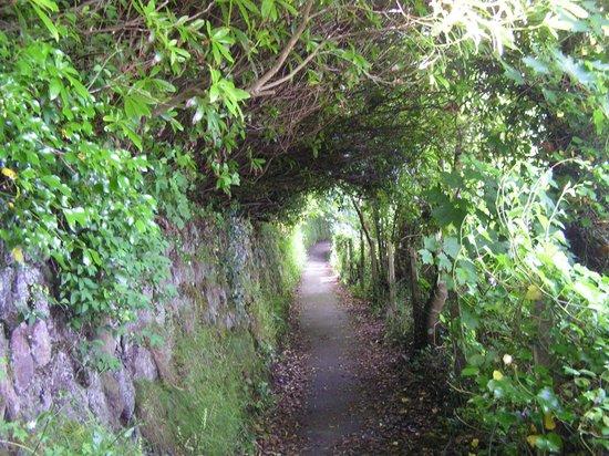 Green Apple Bed & Breakfast: Beautiful walk in the green tunnel