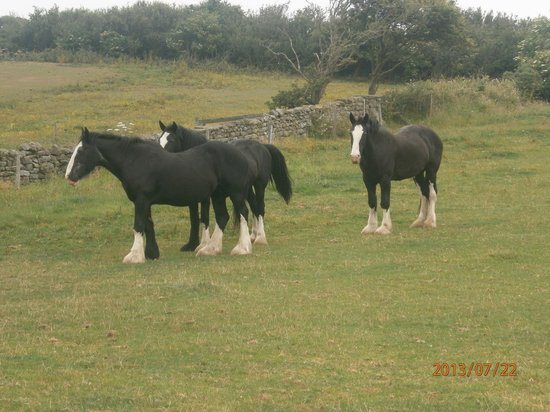 Staintondale Shire Horse Farm : Family of shires