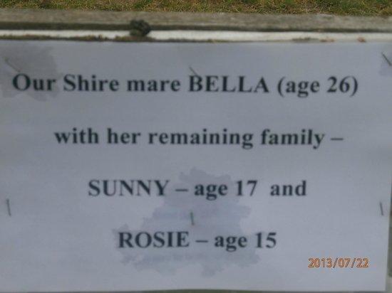 Staintondale Shire Horse Farm: Shire names