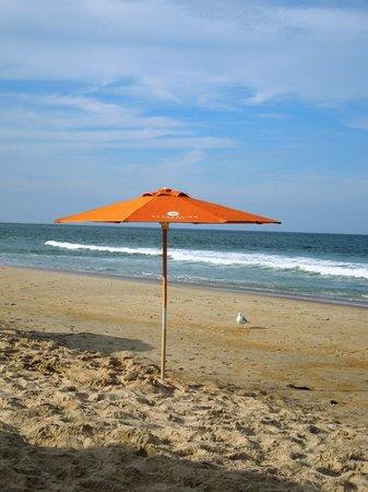 Seagull companion at the beach