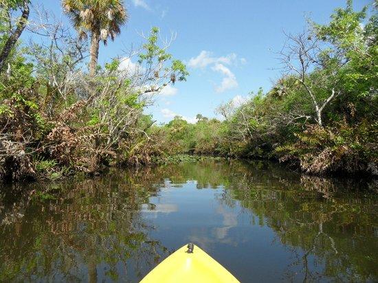 Kayaks & Stuff of the Treasure Coast: Kayak Tour auf dem St. Lucie River