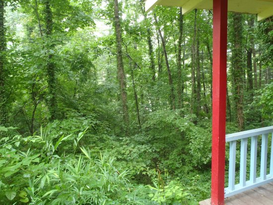 The Pines Cottages: View from Porch