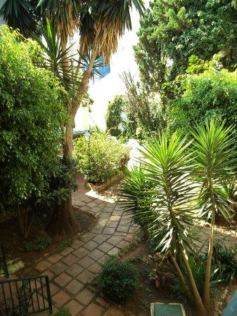 Villa Albero: Garden