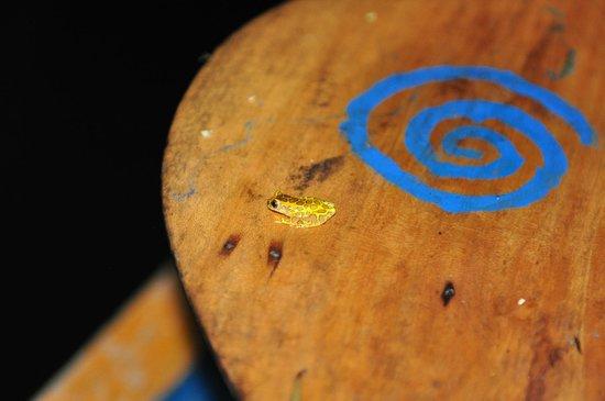 Muyuna Amazon Lodge: tite grenouille