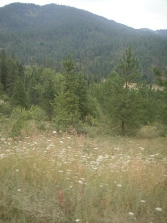 Red Horse Mountain Ranch: views, flowers, trees, oh my