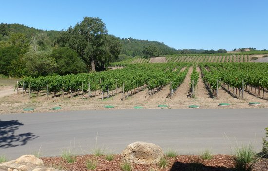 Hendry Ranch Wines: The vineyards in July