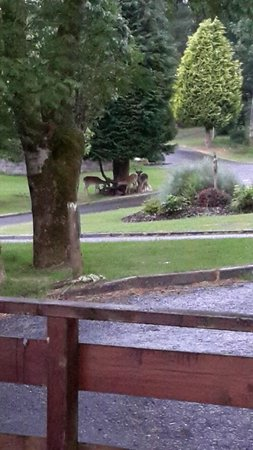 Conifers Leisure Park: Glimpse of deer