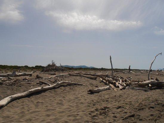 Hotel Principe: spiaggia libera