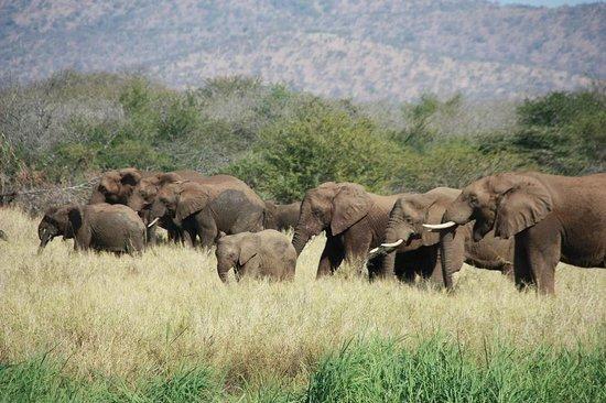 Mvubu River Lodge: Elephants close to the river bed
