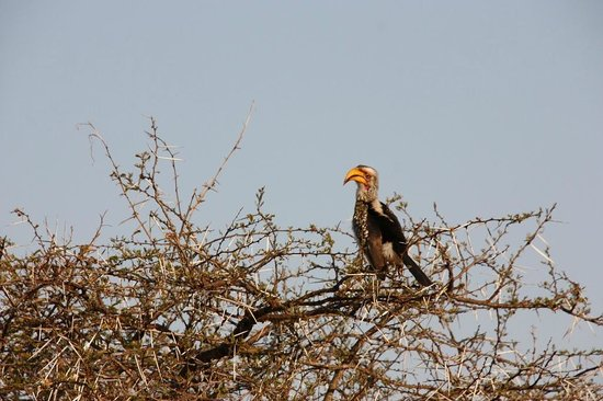 Mvubu River Lodge: Some awesome bird