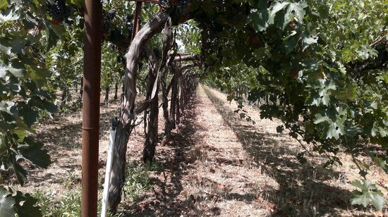 Hagafen Cellars : They have 12 acres of vineyards