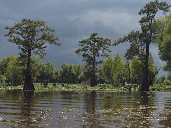 Henderson Swamp Tours