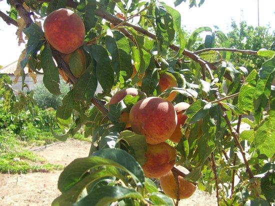 St. George's Retreat Village: Peach tree in the gardens