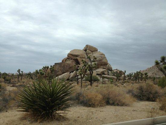 Twentynine Palms, Καλιφόρνια: My favourite photo of the trip.