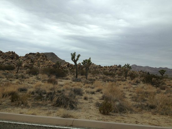 Twentynine Palms, CA: Just a fraction of the hundreds of preserved Joshua Trees.
