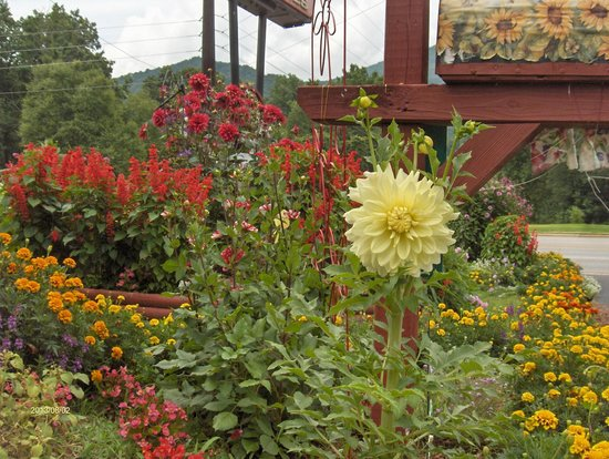Alamo Motel & Cottages: Flowers Blooming At The Alamo Motel and Cottages
