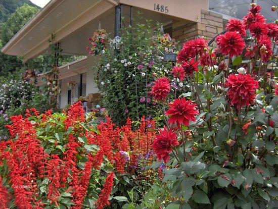 Alamo Motel & Cottages: Alamo Motel and Cottages In Bloom