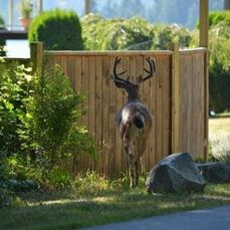 Enchanter Oceanview Suites: Four pointer buck at the front gate