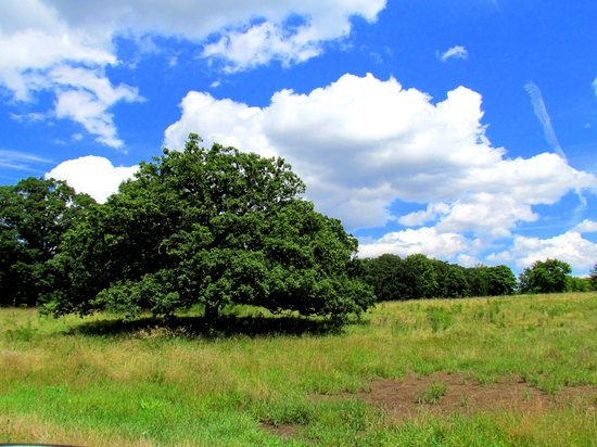 St. James Farm Forest Preserve: Beautiful wooded grounds
