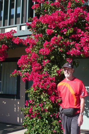 Soledad Motel 8: Bougainvillea growing outside the door
