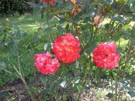 Hacienda La Alegria: Jardines