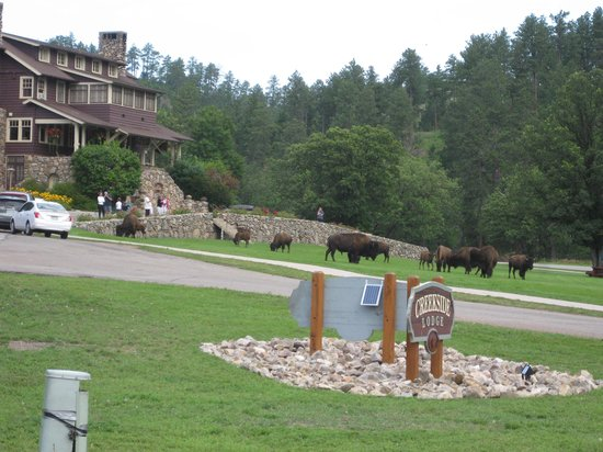 State Game Lodge Picture