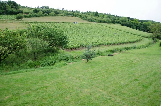 Domaine de la Combotte : The Vineyard we could see from our room