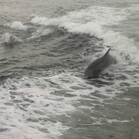 Silver Bullet Tours : Dolphin riding the wave