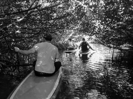 SUP Key West: Beautiful view In the mangroves
