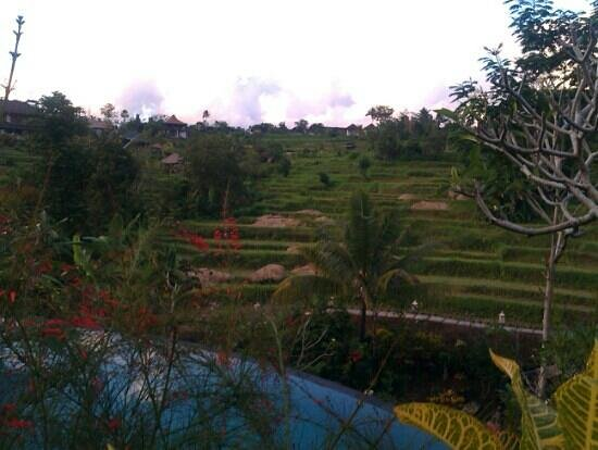 Abian Ayu Villa: vue de la chambre