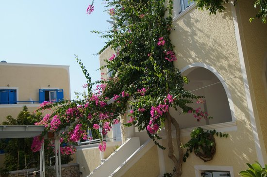 Sellada Apartments Hotel: Beautifull flowers outside