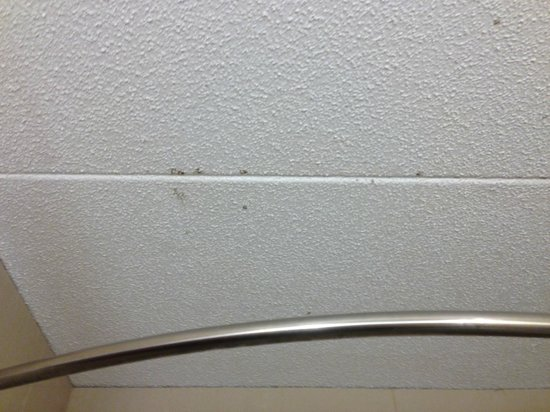 Doubletree Collinsville/St. Louis: Mold growing on bathroom ceiling