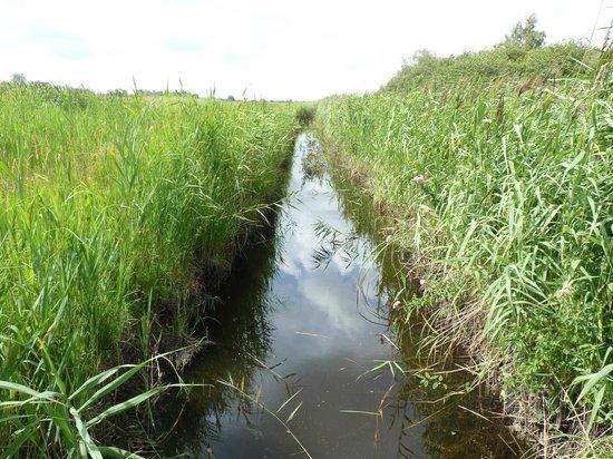 Wicken Fen National Nature Reserve: water