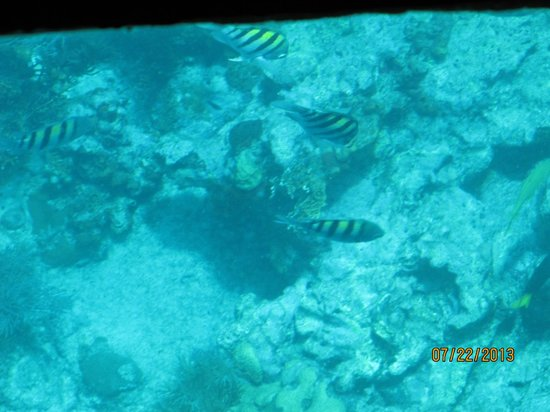 Molasses Reef: Little fish