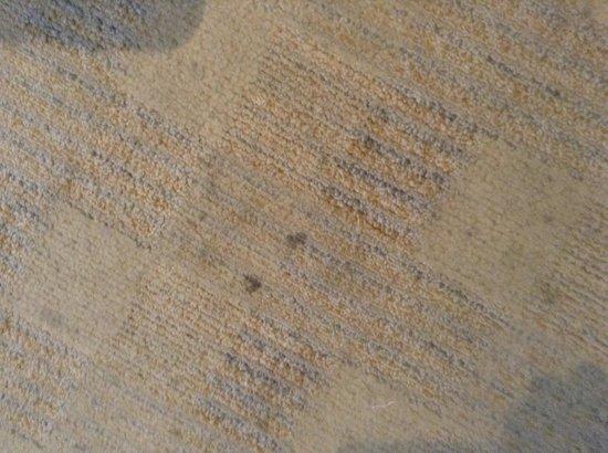Hotel Aqua Palace: Dirty carpets