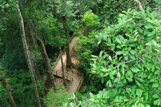 Sumbiling Eco Village: From the canopy looking down