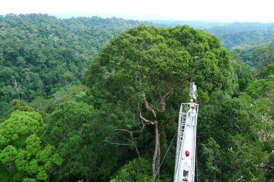 Sumbiling Eco Village: Canopy Walkway