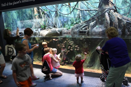 a fascinating and educational experience at the greensboro science center It allowed me to push myself at a really young age to do some really interesting academic work that i research science life sciences education of nearly.