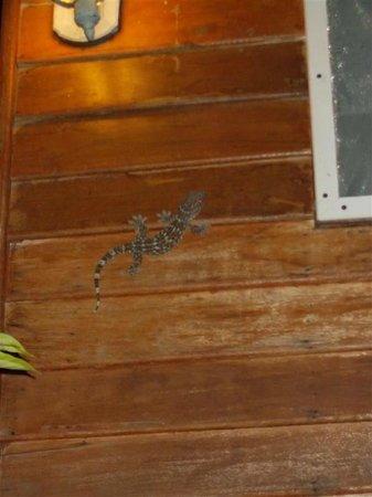 Lilawalai Resort : gekko