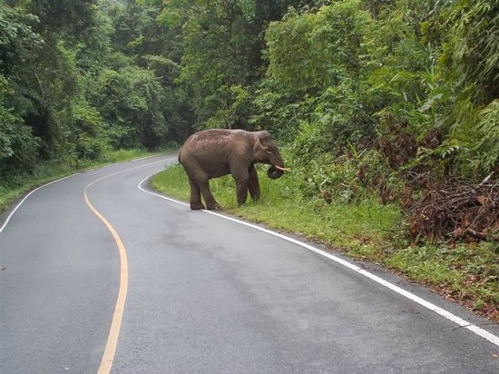 Lilawalai Resort : elephant at khao yai