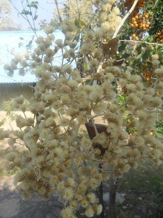 Hostel Catavento: Uma árvore na porta do nosso chalé